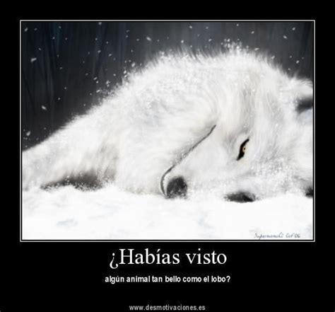 imagenes de lobos taringa para todos quienes aman a los lobos y desmotivaciones