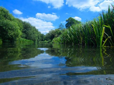 River Of the future for our rivers is not all that bright wwf uk