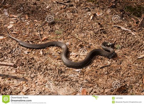 with snake scales stock image image of human design 31920181 snake stock image image of nature scale outdoors animal 14210325