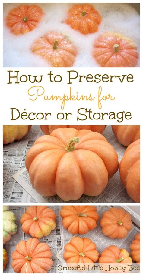 whole pumpkin preservation 1000 ideas about how to preserve pumpkins on preserve pumpkin pumpkins and fall