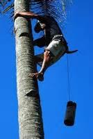 makalah membuat vco kumpulan artikel tentang manfaat air kelapa manfaat