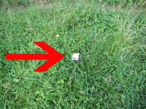 grass trash