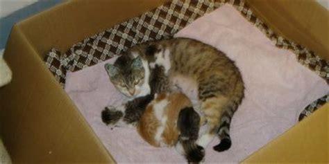wann werden kater geschlechtsreif paarungsverhalten bei katzen kleintierhaltung