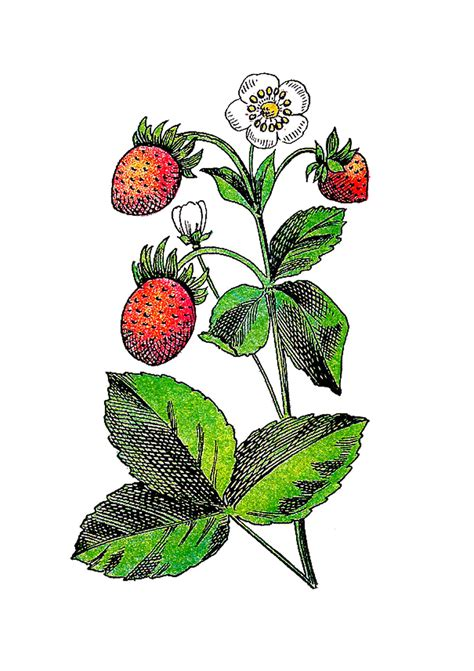 flowers and fruits from the wilderness or thirty six years in and two winters in honduras classic reprint books antique images free flower and fruit graphic vintage
