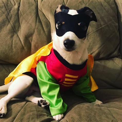 King Kullen Gift Cards - pedigree pet costume contest winners king kullen
