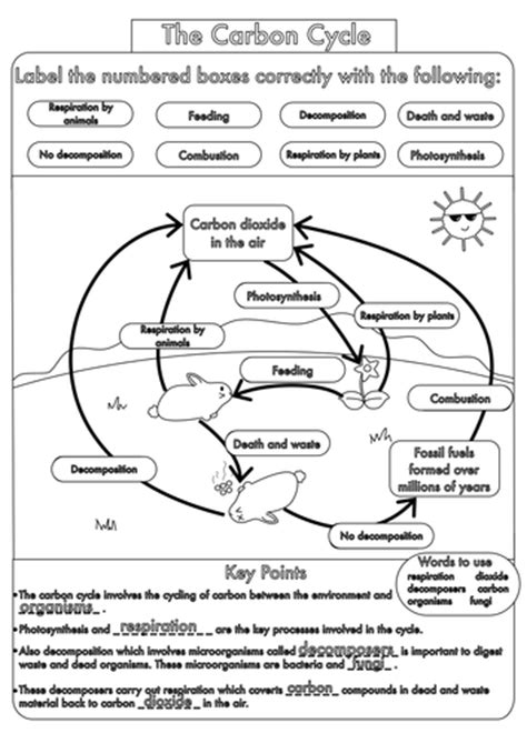 Carbon Cycle Worksheet Answers by Cycles Worksheet Answers Worksheets For School Getadating