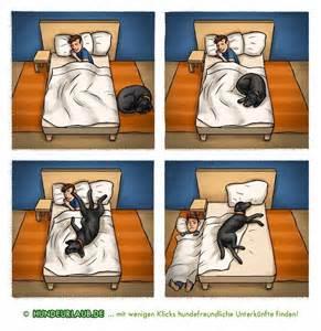 hund darf nicht ins bett darf der hund mit ins bett hundeurlaub de