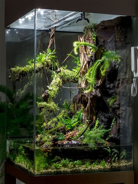 img water terrarium aquascape terrarium plants