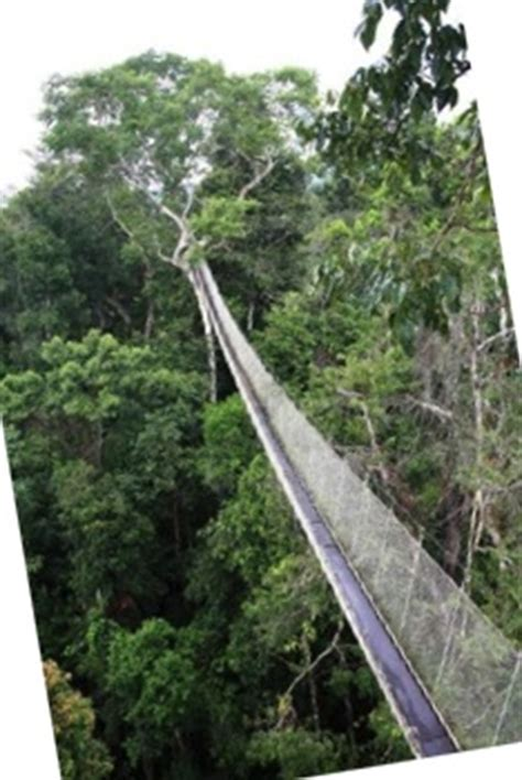 canopy amazon canopy amazon amazon nature tours paragon educational safari in the amazon rainforest staying in