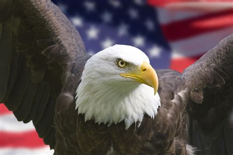 Obama ID Forgeries ~ Extremely Important: Every U.S ... Eagle Communications Webmail