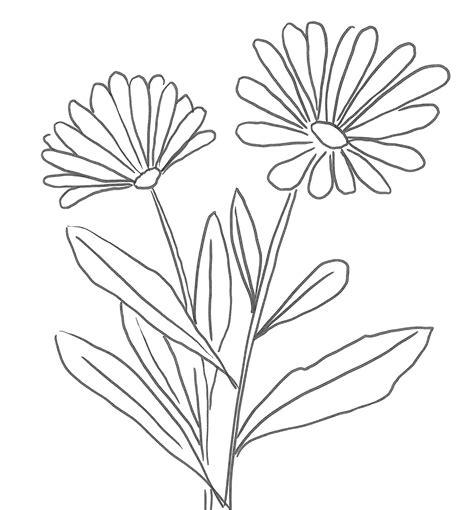 margherita fiore disegno cerchi disegni di fiori ecco qui primule bucaneve viole