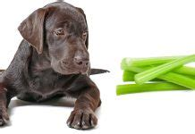 can dogs eat jackfruit can dogs eat bones are bones safe for your lab