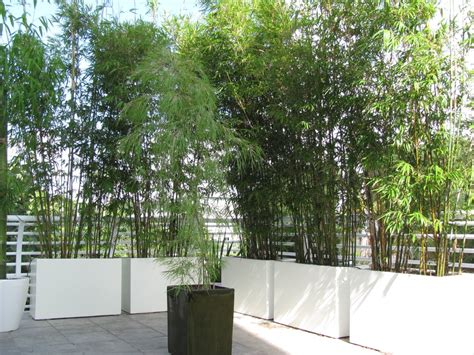 outdoor bamboo and many styles of modern planters in