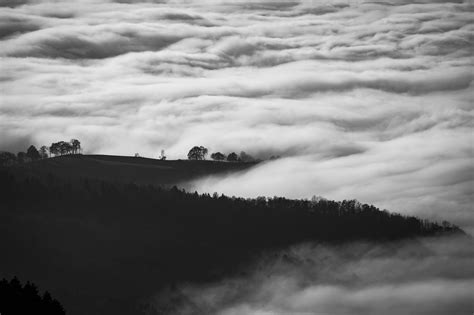wallpaper black and white 4k clouds blackandwhitet on forest 4k wallpaper hd wallpapers