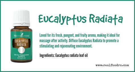 Living Eucalyptus Radiata eucalyptus radiata essential real food rn