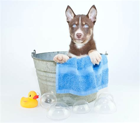 puppy pet grooming pet safety archives splash and dash for dogs