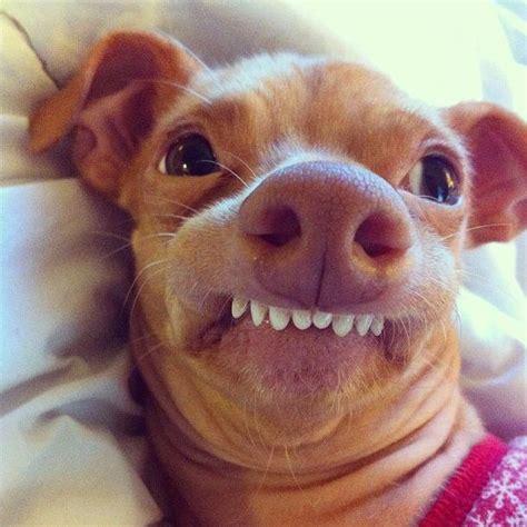 Tuna Dog Meme Generator