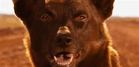 themes in the film red dog red dog trailer flickfilosopher com