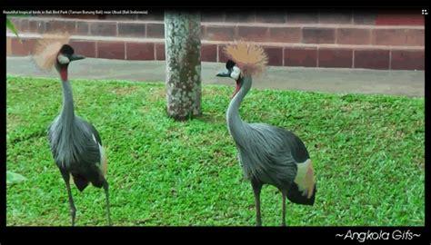Tiket Bali Bird Park Dewasa macam status angkola wisata taman burung bali bali bird park pengertian lokasi