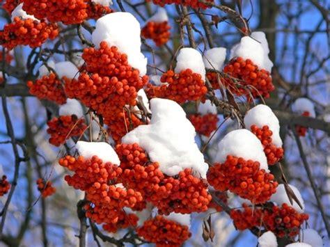 Best Flowering Shrubs - best winter shrubs product range bampton garden plants