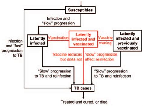 tuberculosis diagram flow diagram of preexposure tuberculosis tb vaccine