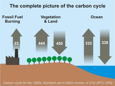completed definition complete carbon cycle