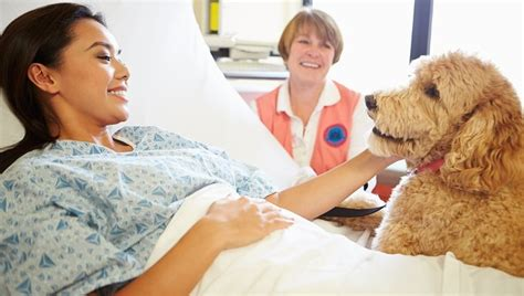 how to register a therapy how to register your as a therapy animal dogtime