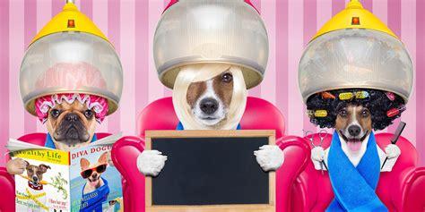 hondentrimsalon aan huis diensten aan huis