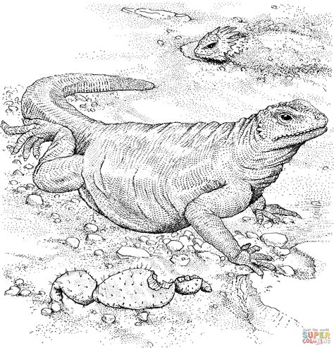 coloring pages of komodo dragon komodo dragon coloring page free printable coloring pages