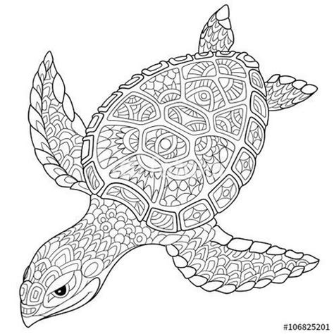 intricate turtle coloring page 9 best turtle images on pinterest coloring pages