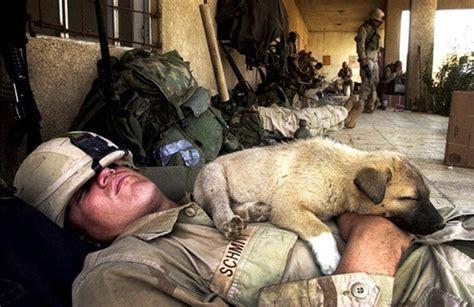 war a soldier s best friend 20 animals who are soldier s best friends