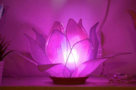 fiori dicembre fiore di luce lade artistiche lotus flower dicembre 2015