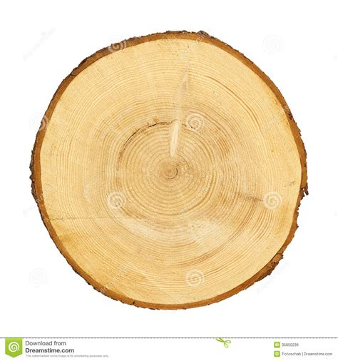 tree cross section tree trunk cross section clipping path stock image