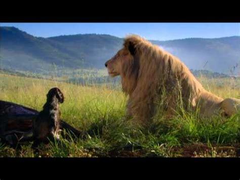 white lion film italiano white lion trailer ufficiale youtube