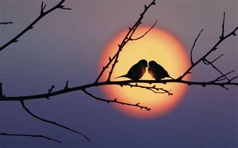 Fantastic Free Interior Design bird couple and sunrise fabulous wallpapers hd