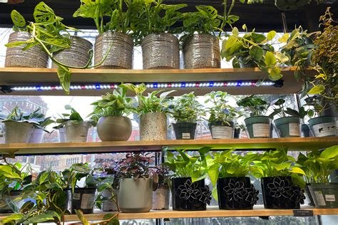 choices  indoor plants  seattle