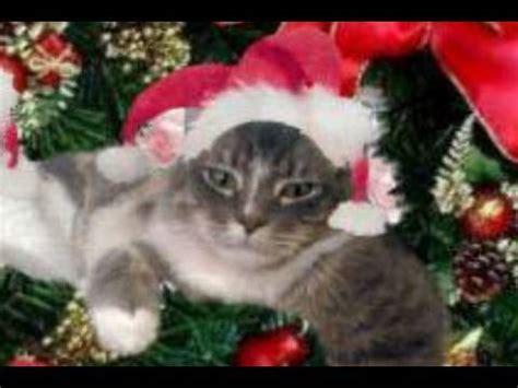 cat sings     merry christmas youtube