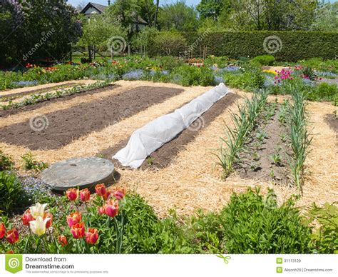vegetable garden royalty free stock images image 31113129