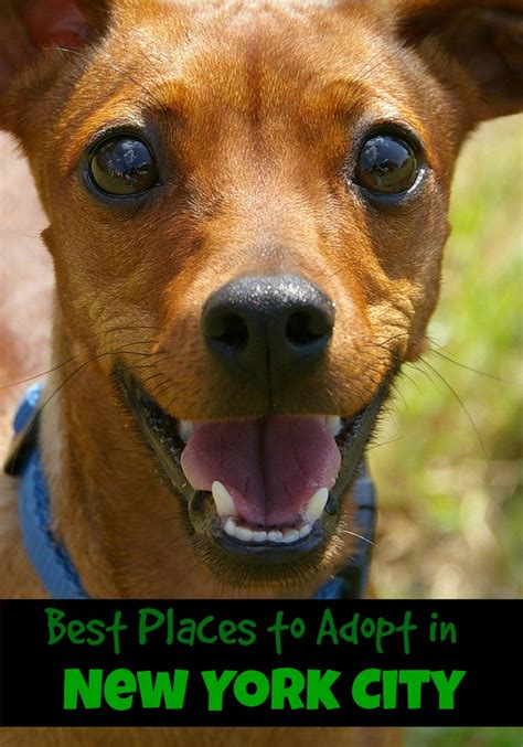 adoption nyc best places to adopt in new york city