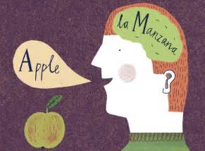 Why Bilinguals Are Smarter Essay the benefits of bilingualism the new york times