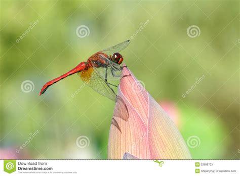 dragonfly stock photos image 32988703