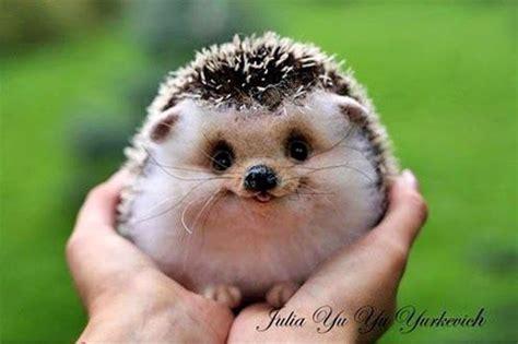 Cute Baby Hedgehog Smiling | cute animal baby hedgehog smiling hands pics