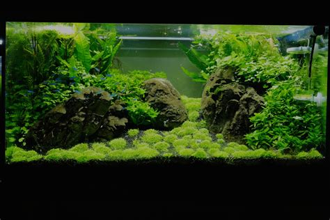 aquascaping forum 125l aquascape nach umgestaltung aquarienvorstellung