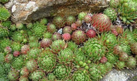 piante grasse da terrazzo awesome piante grasse da terrazzo contemporary design
