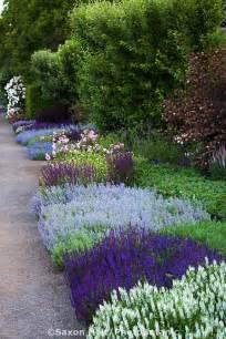 25 best ideas about border plants on pinterest front