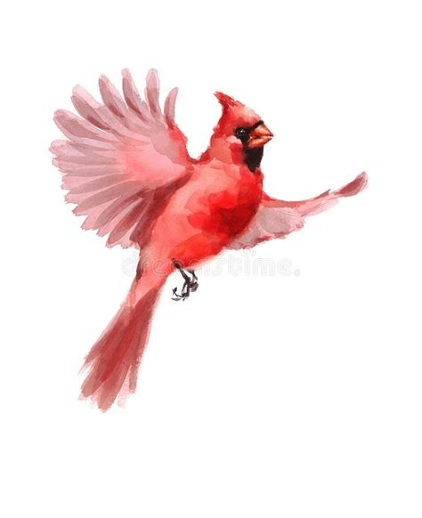 northern cardinal bird flying watercolor winter