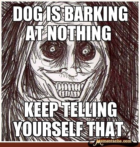 barking at when your barks at nothing are they really barking at ghosts barkpost