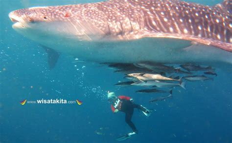 Escape To Derawan Labuan Cermin And Whale Shark Talisayan 4d3n derawan and labuan cermin explore with whaleshark 4 hari 3
