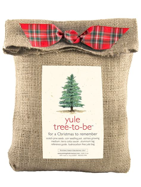 grow your own christmas tree kit grow your own tree yule tree grow kit gardeners