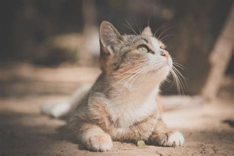 wallpaper cat pet  animals